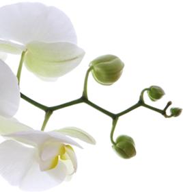 img-flower1